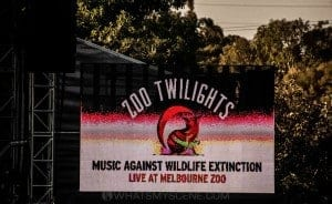 Zoo Twilights