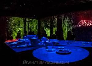 Wonderland ACMI