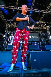 Chocolate Starfish - Mornington Racecourse, Melbourne 19th Jan 2019 by Paul Miles (27 of 29)